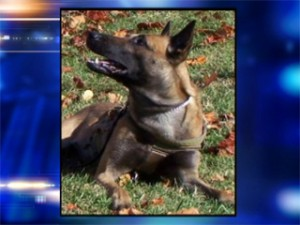 Freddy the FBI dog/fox news photo