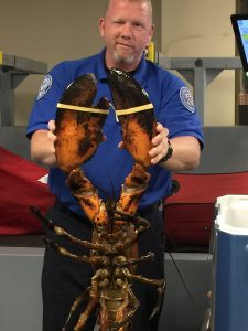 Giant lobster posted on the TSA's Twitter account.